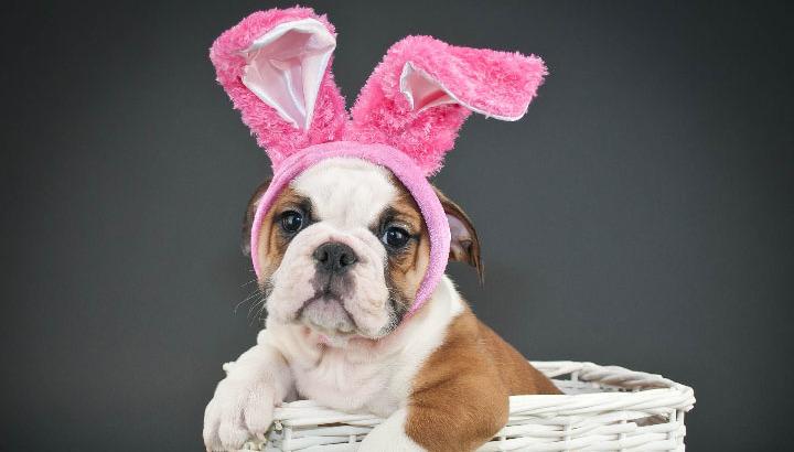 Easter_Bunny_Dog